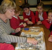 Museum teacher Carol and pupils from St Agnes School look at flints